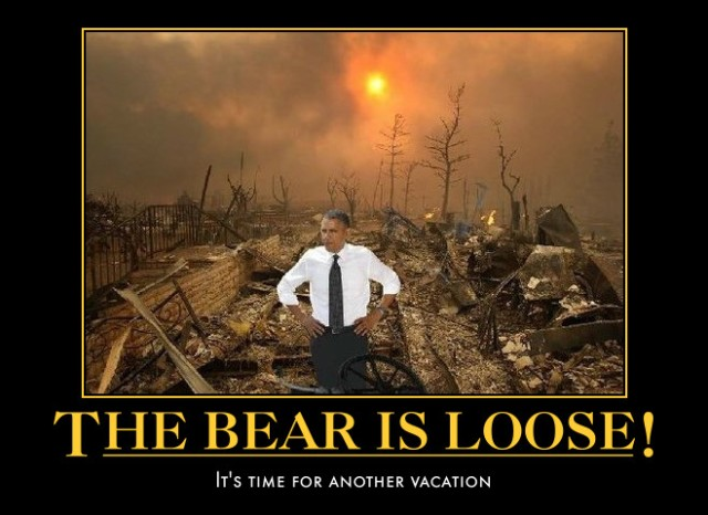 bear is loose 4