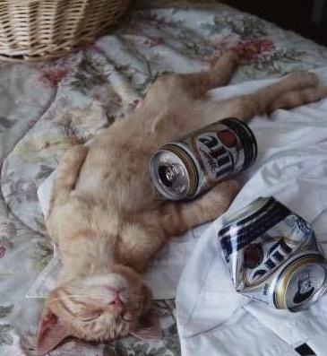 drunk-cat