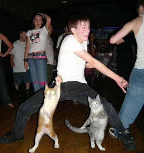 kitty rave