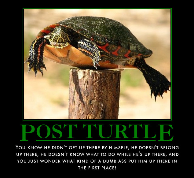 Obama-Post-Turtle
