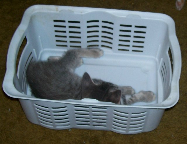 Magic Kitty Trap: Set basket on floor and count to three - Presto!  - kitty appears and jumps in basket.