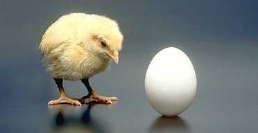 i-9400cabe9379a10e5ae5d1c90bc352c1-chicken192
