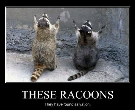 raccoon salvation