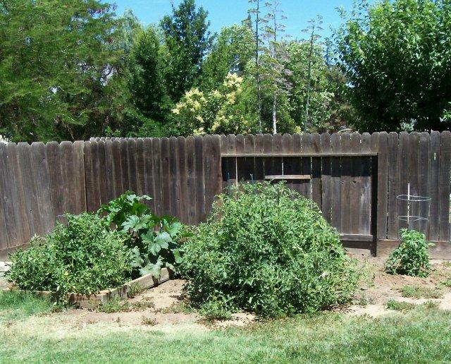 my secret garden 003