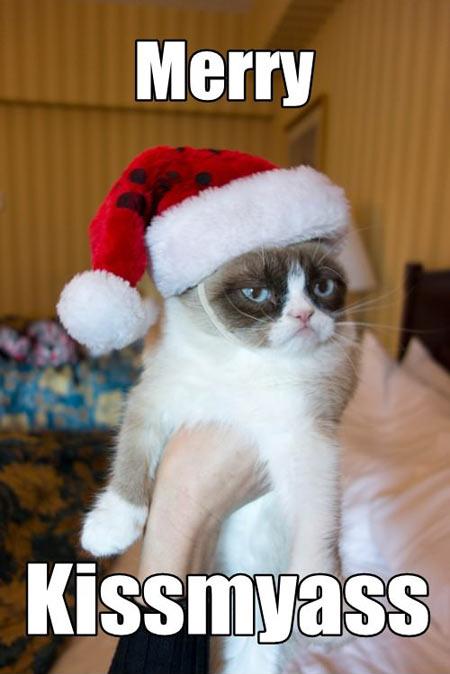 grumpy cat04
