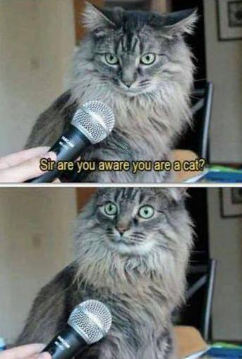 ur a cat001