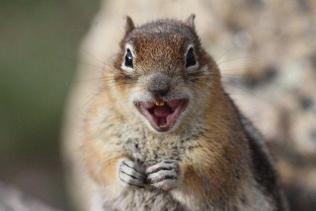 squirrels-rabies