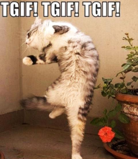 funny-cat-tgif